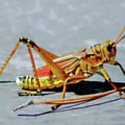 15- Lubber Grasshopper Art Print