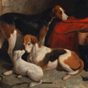 A Couple Of Foxhounds With A Terrier - The Property Of Lord Henry Bentinck  Art Print