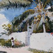 A Garden In Nassau Art Print