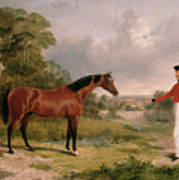 A Horse And A Soldier Art Print
