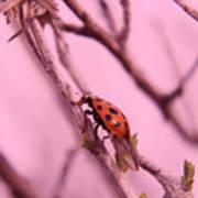 A Ladybug   Art Print