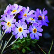 Alaskan Wild Flowers Art Print
