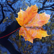 All About Autumn Art Print