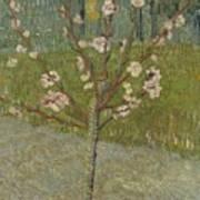 Almond Tree In Blossom Arles, April 1888 Vincent Van Gogh 1853 - 1890 Art Print