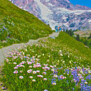 Alta Vista Trail In  Mount Rainier National Park, Washington  Art Print