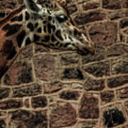 Amazing Optical Illusion - Can You Find The Giraffe Art Print