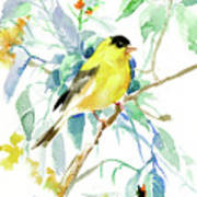 American Goldfinch Art Print