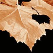 American Sycamore Leaf And Leaf Shadow Art Print