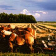 Amish Hay Rig Art Print