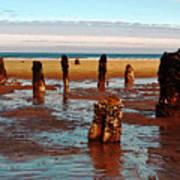 Ancient Trees At Neskowin Beach Art Print