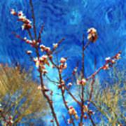 Apricot Blossoms El Valle Art Print