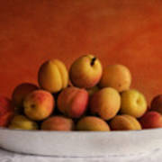 Apricot Delight Art Print