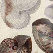 Aquatic Animals - Sea - Shells - Composition - Alien - Wall Art  - Interior Decoration  Art Print