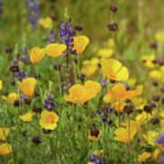 Arizona Wildflowers  Art Print