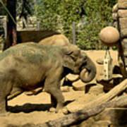 Asian Elephant Art Print
