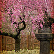 Asian Spring Art Print by Chris Lord