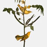Audubon: Warbler, 1827-38 Art Print