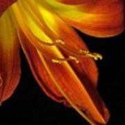August Flame Glory Art Print