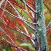 Autumn Colors 25 Art Print