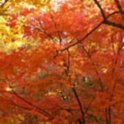 Autumn Gold Art Print