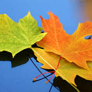 Autumn Leaves - Foliage Art Print