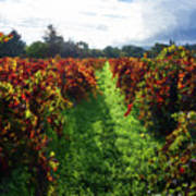 Autumn Vineyard In The Morning  Art Print