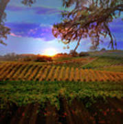 Autumn Vineyard Art Print