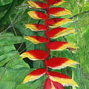 Balinese Heliconia Rostrata Art Print