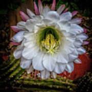 Beautiful Cactus Art Print