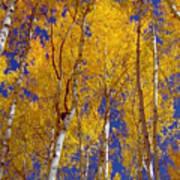 Beautiful Fall Season Nature Renews Itself  Theme Green Trees Reaching For The Sky  Save The Environ Art Print