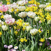 Beautiful Spring Flowers Art Print