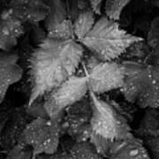 Bellevue Botanical Garden Leaves 6395 Art Print
