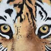 Bengal Eyes Art Print