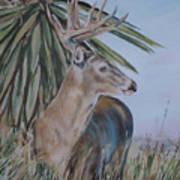 Berry Buck Art Print