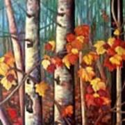 Birch And Maple Art Print