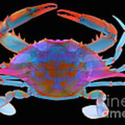 Blue Crab, X-ray Art Print