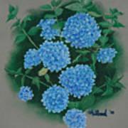 Blue Hibiscus Art Print