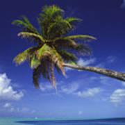 Bora Bora, Palm Tree Art Print