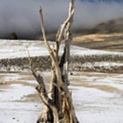 Bristlecone Fog And Sierra Nevada 1 Art Print