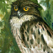 Brown Fish Owl  Art Print