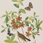 Brown Headed Worm Eating Warbler Art Print