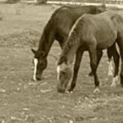 Brown Horses Grazing Art Print