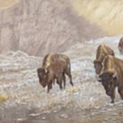 Buffalo Under The Alpenglow Art Print