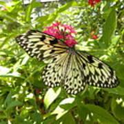 Butterfly-1 Art Print
