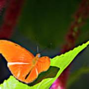 Butterfly 22 Art Print