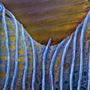 Butterfly Wing Scale Sem Art Print by Eye of Science