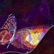 Butterfly Wings Insect Nature  Art Print