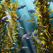 California Kelp Forest Art Print