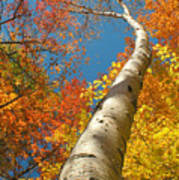 Canadian Autumn Art Print