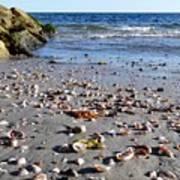 Cape Cod Beach Finds Art Print